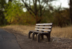 Lonely Bench 1350 (casch52) Tags: park county canon woodland bench landscape photo oak mood dof bare empty trail photograph lonely melancholy placer roseville rocklin 50d explorer352 familygetty