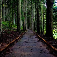(TheJbot) Tags: trees japan forest square path yamanashi 1x1 jbot inagako thejbot