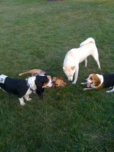 Sandy, Laney, Kaya, and Baxter