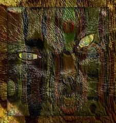I Saw a Wildcat in Migrainia! (Joana Rojas - still here) Tags: colors cat chat digitalart textures fantasy gato wildcat domesticcat migraine sharingart theawardtree migrainia