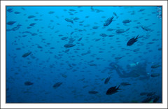 Under the Sea (Mr.GG) Tags: blue sea fish under nikond50 mrgg ggmgl ganulzii