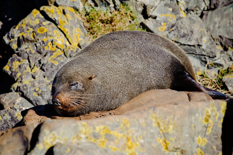 Seal Colony @ Sinclair Head