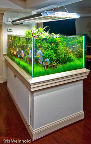 Michael's 210G Aquarium