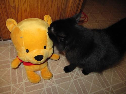 pooh and jasper