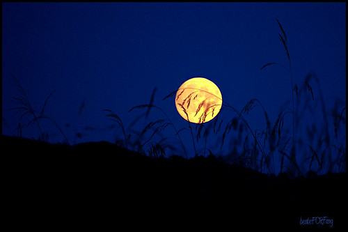 Harvest Moon by forf