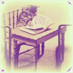 Alouette, gentille alouette OR cats sleep anywhere  (Vol-au-Vent) Tags: pink paris france cat square blurry purple violet retro nostalgic dreamy oldfashioned nurseryrhymes oldpostcard lrp happyweekendeverybody perfectpurplesaturday kikivolauvent catreadingbook allrightsreservedbykikivolauvent prettypinkthemedweekend seenatbookstandbouquinistealongseine heavilyworkedoverwithpicnik catssleepeverywhereandanywhere childrensrhymebyeleanorfarjeonat alouettechansonfranaispourenfantspetitsetgrands animalsschoolclassroom pinknurseryrhymes
