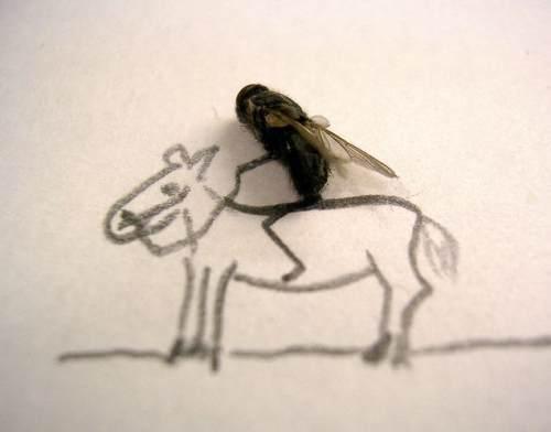 dead-flies-art-3