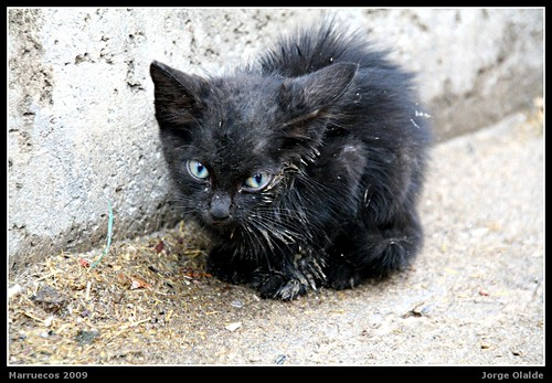 Kitten under the rain (Medina de Fez)