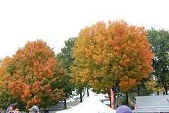 Fall Foliage at the Fairgrounds