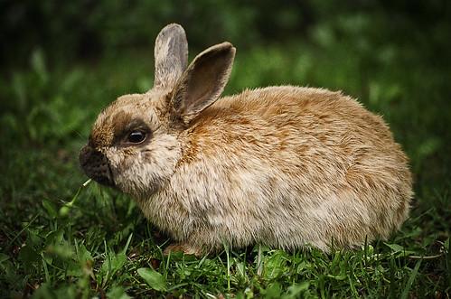 Bunny Escapes Zoo - 2004
