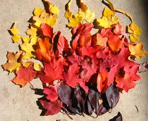 Fall flames