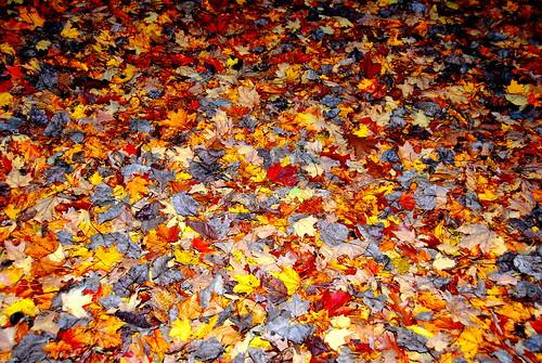 fallen colors
