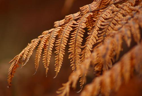 Dead fern