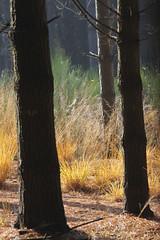 Il giallo e il verde, Parco naturale dei Lagoni di Mercurago Piemonte 2009 (Zaffiro&Acciaio: Marco Ferrari) Tags: november autumn italy parco nature italia novembre natura 300mm piemonte autunno parc piedmont 2009 arona vco canon500d novara lagoni mercurago parcodeilagoni parconaturaledeilagonidimercurago