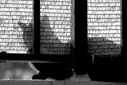 Sombras gatunas en el María María