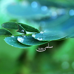 (Salma Alzaid ) Tags: blue light green leaves diamonds day bokeh sparkle rainy droplet salma askme       mlg0o0fa salmaphotography macro58mm httpwwwformspringmemlg0o0fa