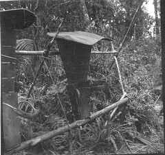 Backpacks used by dammar gum gatherers