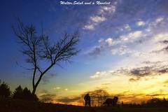 The dawn 2 (waltersoluh) Tags: sky cloud dog sunlight nature silhouette sunrise landscape rs fpg platinumphoto superaplus aplusphoto theunforgettablepictures alwaysexc colorsofthesoul artistictreasurechest redmatrix magicunicornverybest adriënnesmagicalmoments