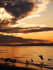 Gaviotas, nubes y mar (arturomunoz.cl) Tags: ocean sunset sea cloud digital atardecer mar seagull gull concepcion explore puestadesol gaviota nube oceano penco