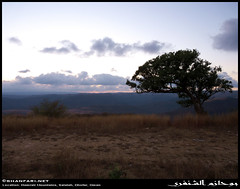 Hamrair Mountains, Dhofar (Shanfari.net) Tags: winter mountains nature lumix raw natural panasonic oman fz zufar rw2 salalah sultanate dhofar  khareef          governate lumixaward dofar fz38 fz35 dmcfz35  hamrair