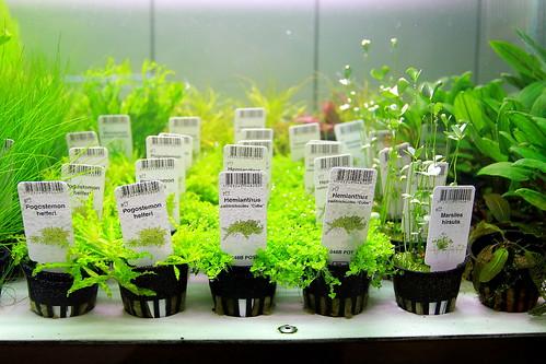 Tropica plants