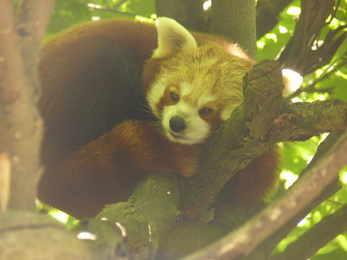 Ruhepause - Ein Tag im Mai im Tierpark Berlin-Friedrichsfelde