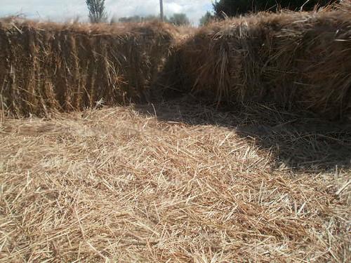 Prairie Hay square bales