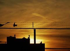 Good Night (KaDeWeGirl) Tags: city newyorkcity sunset urban orange silhouette fence bronx
