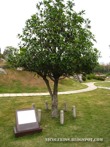 osmanthus memorial tree