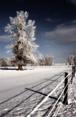 Bozeman Tree Midnight (PVA_1964) Tags: snow tree ice landscape frozen nikon tripod d1x bozemanmt 2870mmf28d thebestshot capturenx2 flickraward
