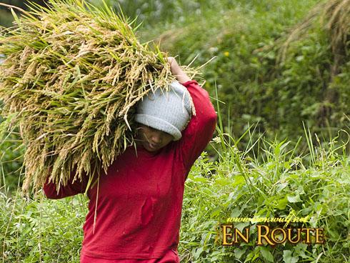 Imugan Female Farmers