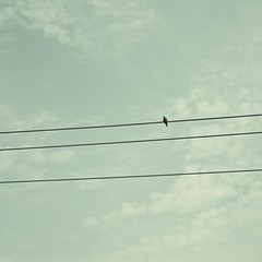bird on a wire (Dylan_Murphy) Tags: sky green bird lines clouds composition square wire minimal wires simple minimalistic