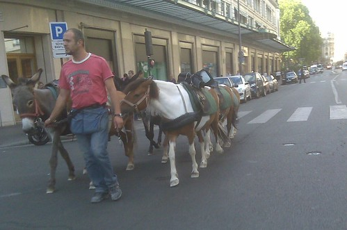 Poneys devant le Bon Marché à Paris