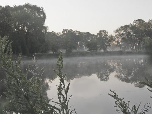 locus hills fog