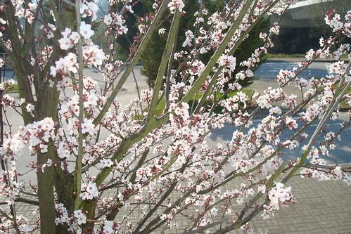 Veio a Primavera...
