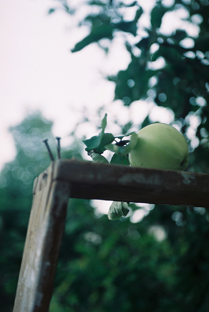 lonely apple on ladder