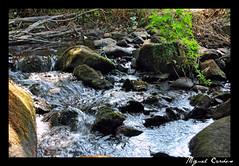 Rio Sever 2 (Miguel Tavares Cardoso) Tags: portugal rio river sever otw pontevelha miguelcardoso ilustrarportugal nikonflickraward miguelcardoso2008 migueltavarescardoso
