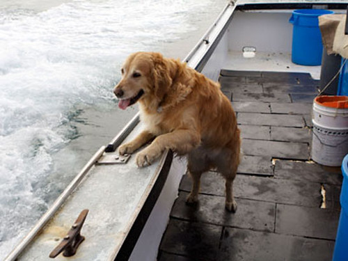 Roxy the Seafaring Dog Never Gets Seasick