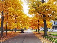 Church Street (Larry the Biker) Tags: autumn trees orange fall colors leaves yellow maple michigan neighborhood foliage romeo beech