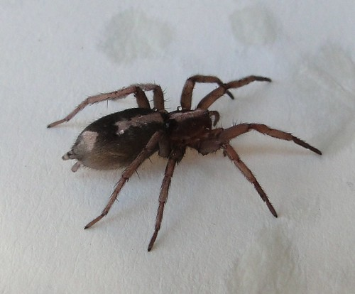 """YAS (yet another spider) • <a style=""""font-size:0.8em;"""" href=""""http://www.flickr.com/photos/10528393@N00/4073327386/"""" target=""""_blank"""">View on Flickr</a>"""