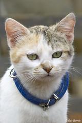 Gato (Rita Barreto) Tags: animal gato felino animaldomstico
