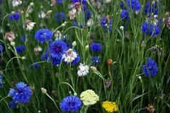 flower () Tags: pentax korea    k100d