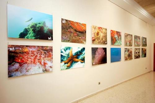 Exposición de fotografía Submarina