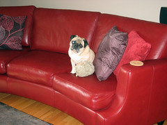 norman loves the red couch best