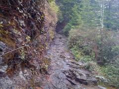 Alum Cave Creek Trail 1
