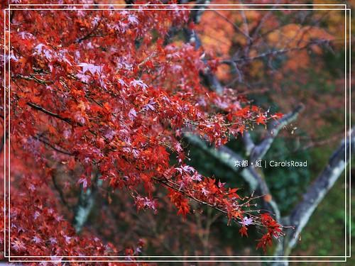2009-12-11 京都 002 R
