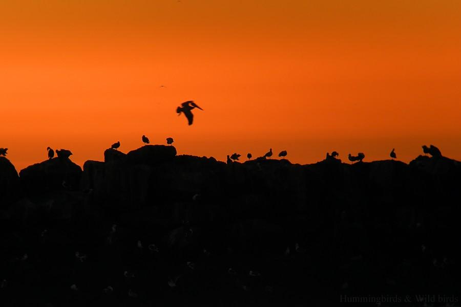 Sunset 12091