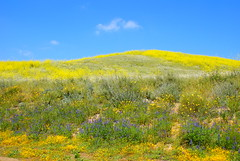 Chino Hills State Park - 21 (Bradley Murrell) Tags: california park travel flowers vacation plants nature floral grass outside outdoors landscapes scenery scenic brush hills recreation wilderness