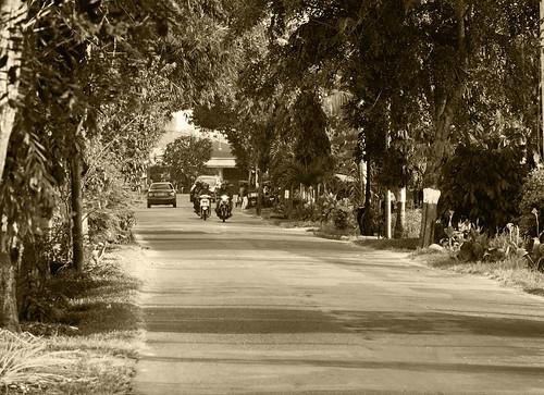 road (30/365 dps)