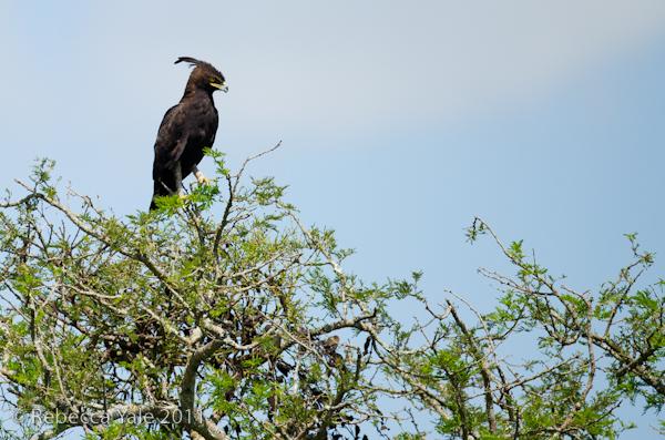 RYALE_Rwanda_Uganda_Safari-180